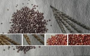 Quinoa vs. Dinkel