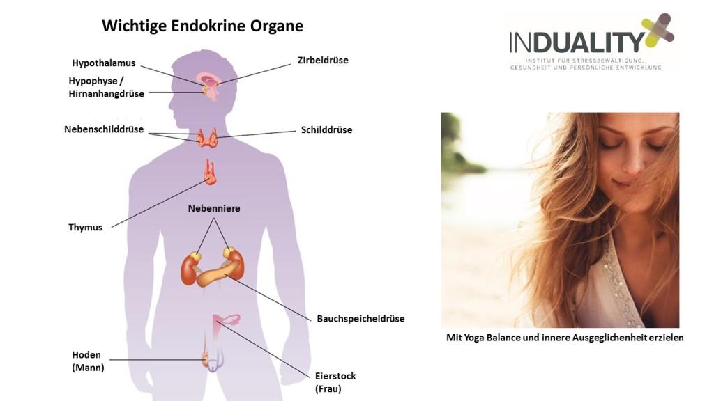Bei Stress, Müdigkeit und Schilddrüsenunterfunktion: Hormonhaushalt ...