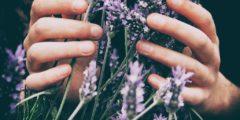 Die pflanzliche Lösung gegen Stress